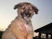 продажа собаки Могилев