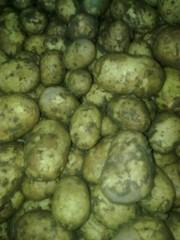 Картофель из Австрии