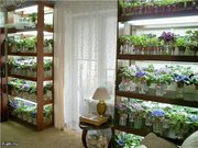 Стелаж для фиалок,  др. растений с подсветкой. МДФ