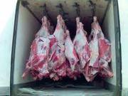 говядина конина свинина телятина