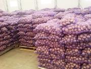 Картофель оптом напрямую от производителя!