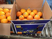 Апельсины  и другие фрукты и овощи из Египта от производителя.