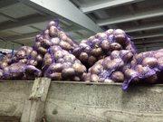 картофель 5_7+