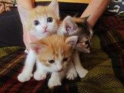 Милые котята в добрые руки