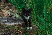 Официального окраса кошка ищет любящих хозяев