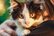 Самая пушистая маленькая кошка в дар