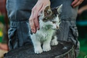 Пушистый любознательный и преданный маленький кот ищет дом