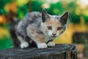 Маленькая милая кошечка ищет дом