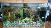 Продам аквариум с оборудованием и декорациями
